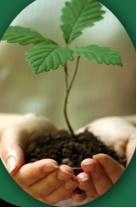 HERBAL STUDIES-Now accepting applications for our Spring 2012 intake